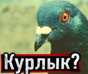 Устинов Александр - Голубь